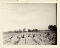 Young women sowing a field near Buffalo, New York, (1)