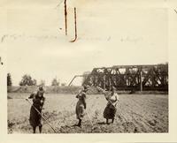 Young women hoeing a field near Buffalo, New York, August 18, 1918 (2)