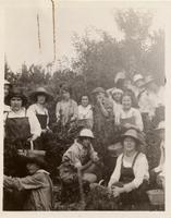 Young women picking cherries in North germantown, New York
