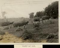 """""""Bumper hay crop"""""""