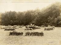 Men making hay