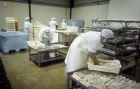 Returned Peace Corps Volunteer Peter Wadsworth's fish packing plant, San Antonio, Chile, 1998